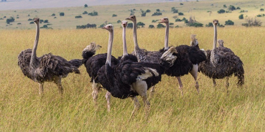 Africa, Africa wildlife, ecology, ecology research, African ecology, Wits University, ecological research, wildlife history, animal populations, wildlife populations