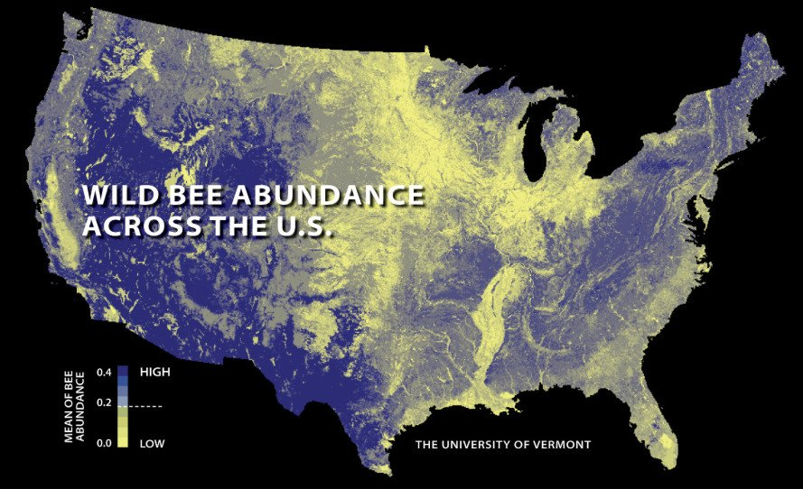 bees, honey bees, bee die-offs, bee populations, declining bee populations, bees and agriculture, wild bee populations, university of vermont, insu koh, bee map, bee population map