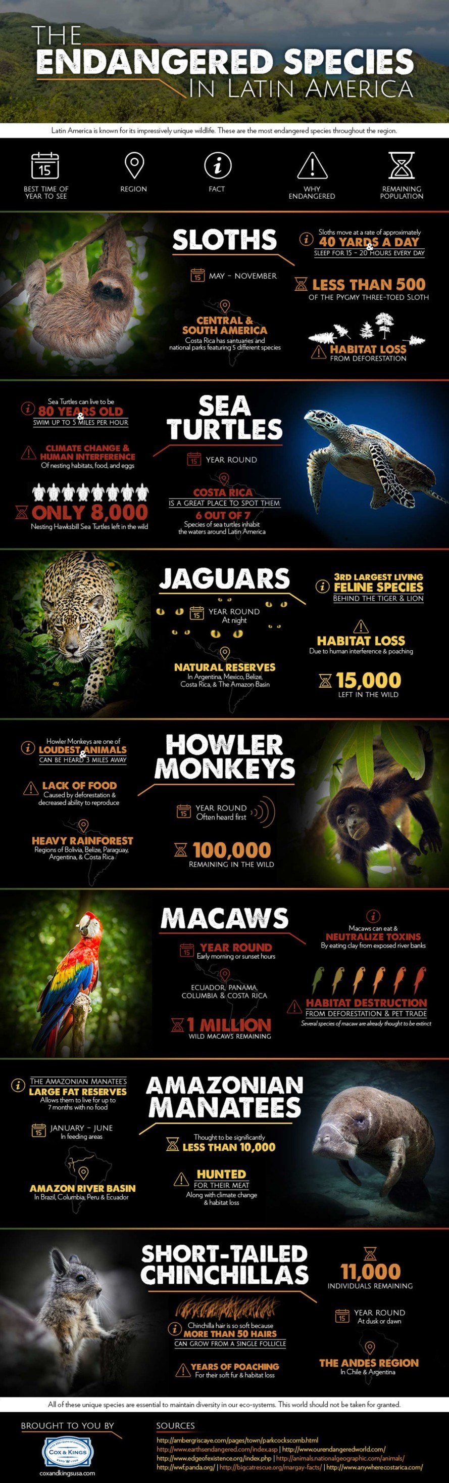 hunting, poaching, hunting endangered animals, habitat destruction, habitat, reader submission, infographic, endangered animals, endangered sloth, south american animals, south american endangered animals, central american endangered animals,