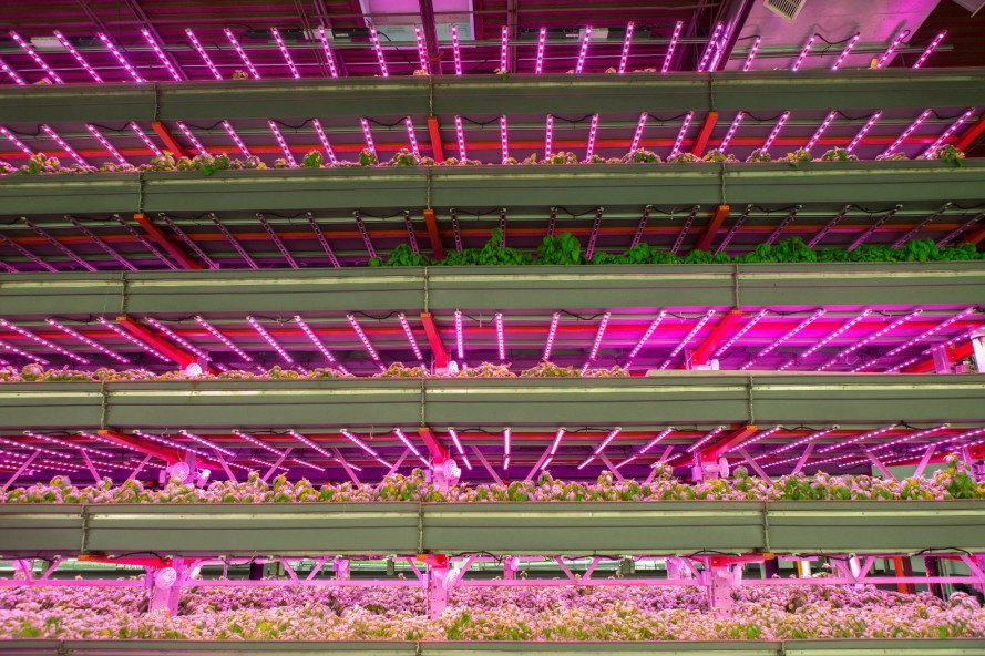 farmedhere, west louisville foodport, louisville kentucky, vertical farming, indoor farming, aquaponics, vertical indoor farm, microgreens, herbs, local produce, local farmers, local food