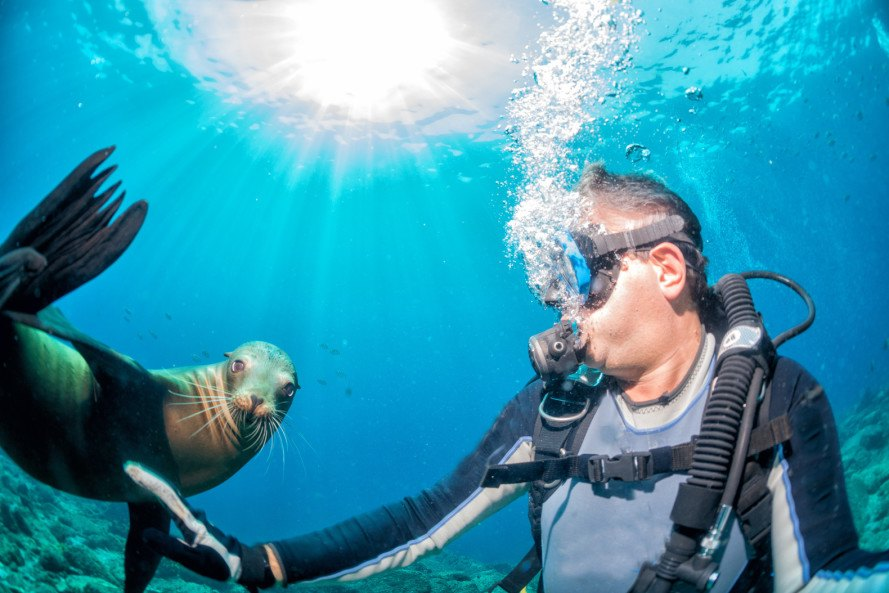 furry diving suit, furry wetsuit, wetsuit technology, diving, wetsuit, seals, sea lions, alice nastro, felice frankel, mit, massachusetts institute of technology, biomimicry