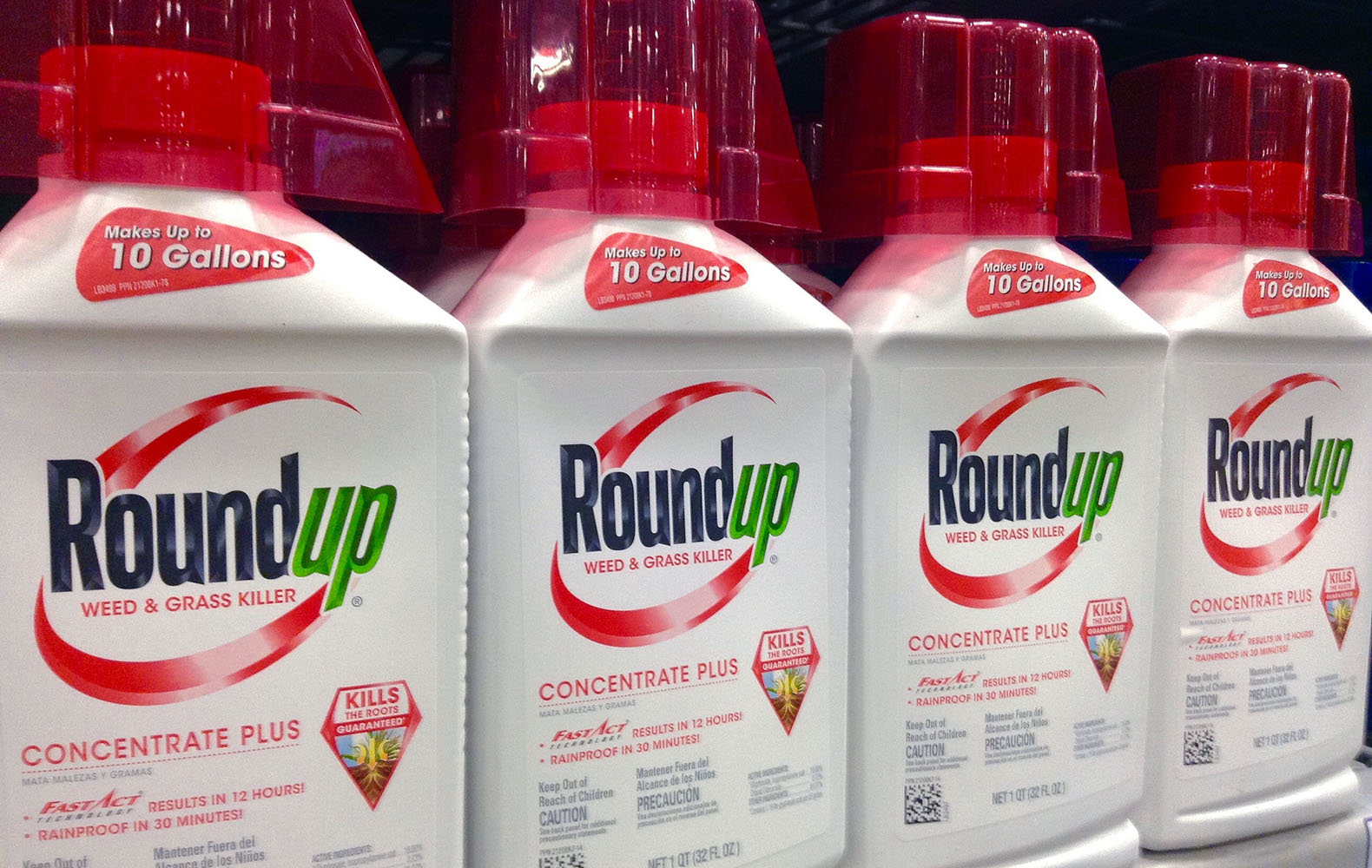 Glyphosate induces human breast cancer cells growth via ...
