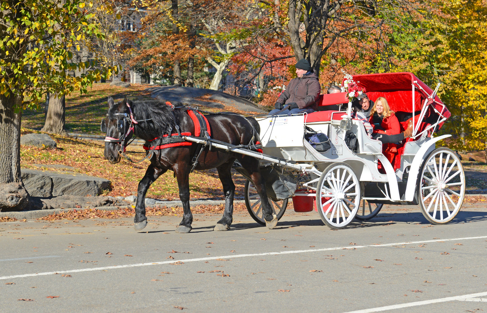 horse drawn carriage ride nyc central park inhabitat green design innovation architecture. Black Bedroom Furniture Sets. Home Design Ideas