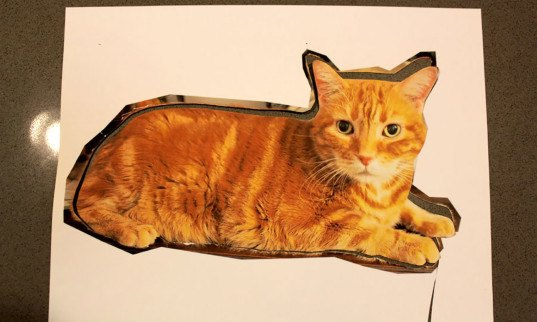 Concorso Design Your Cat : How to make a pillow that looks like your cat « inhabitat