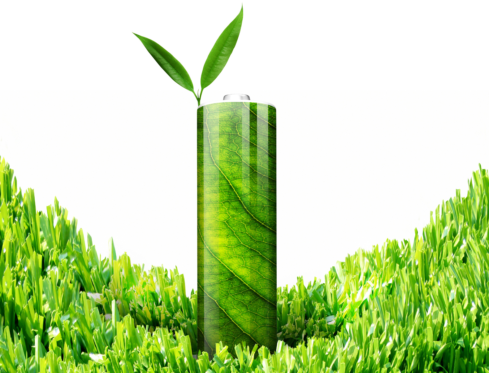Scientists make eco-friendly batteries out of leaves