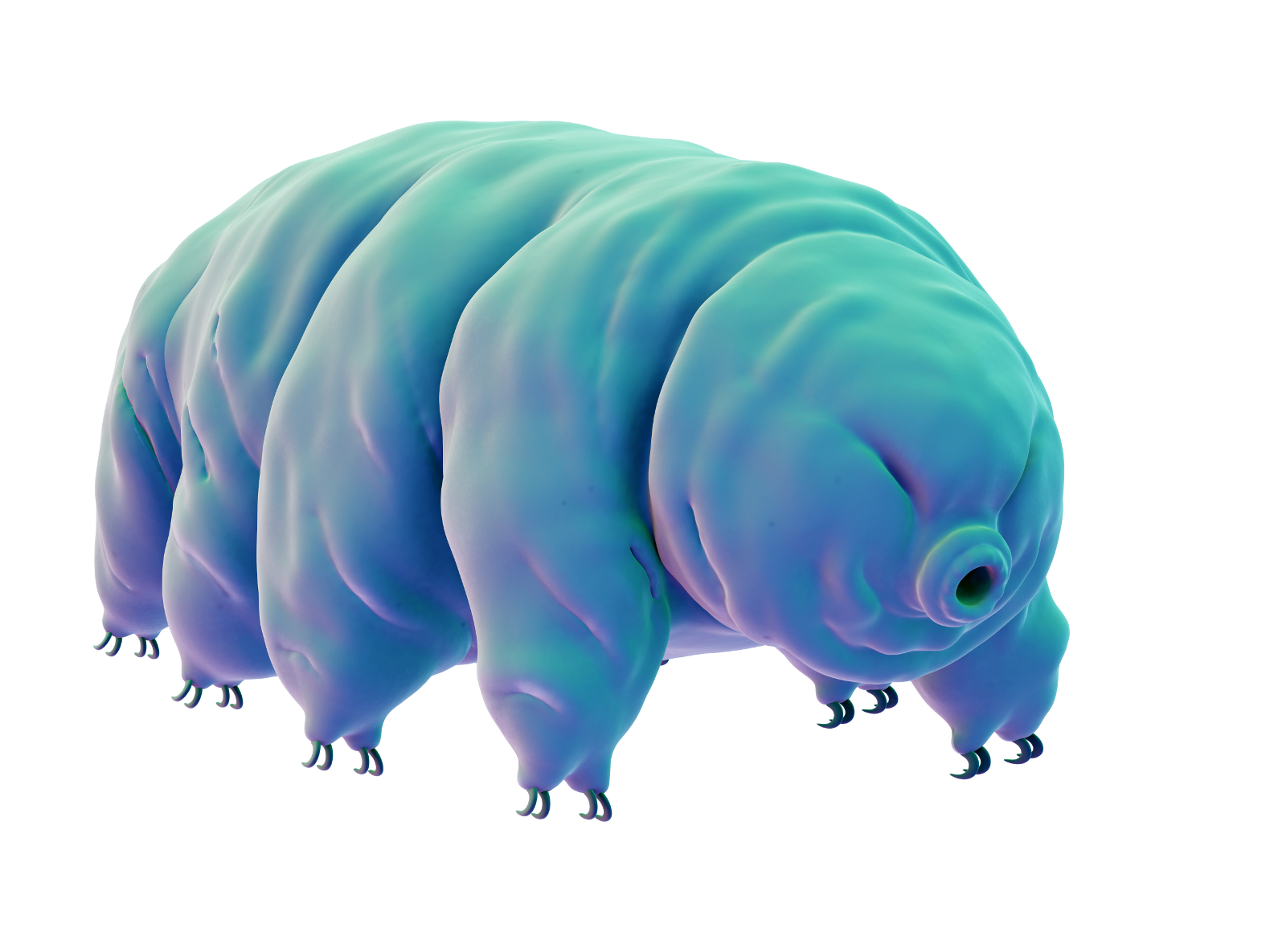 Water bear brought back to life after being frozen for 30 years