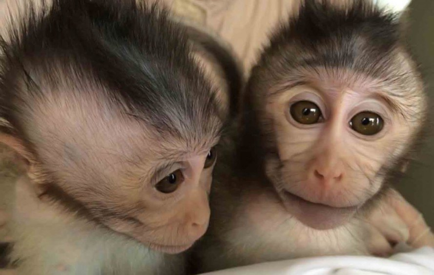 monkeys, primates, autism, animal testing, medical testing, neuroscience, Shanghai Institutes for Biological Sciences, China, Rett syndrome