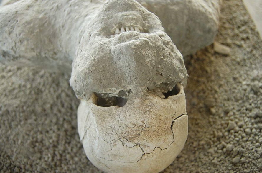 human skull in ash, pompeii, human remains, archaeology,