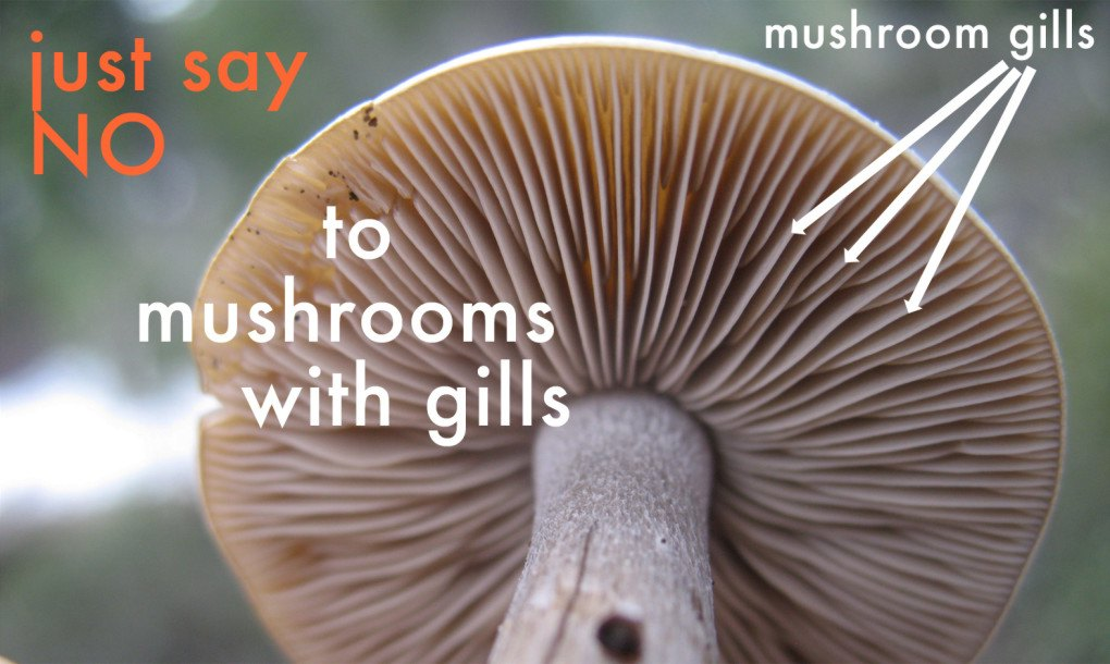Image result for red mushrooms of alabama