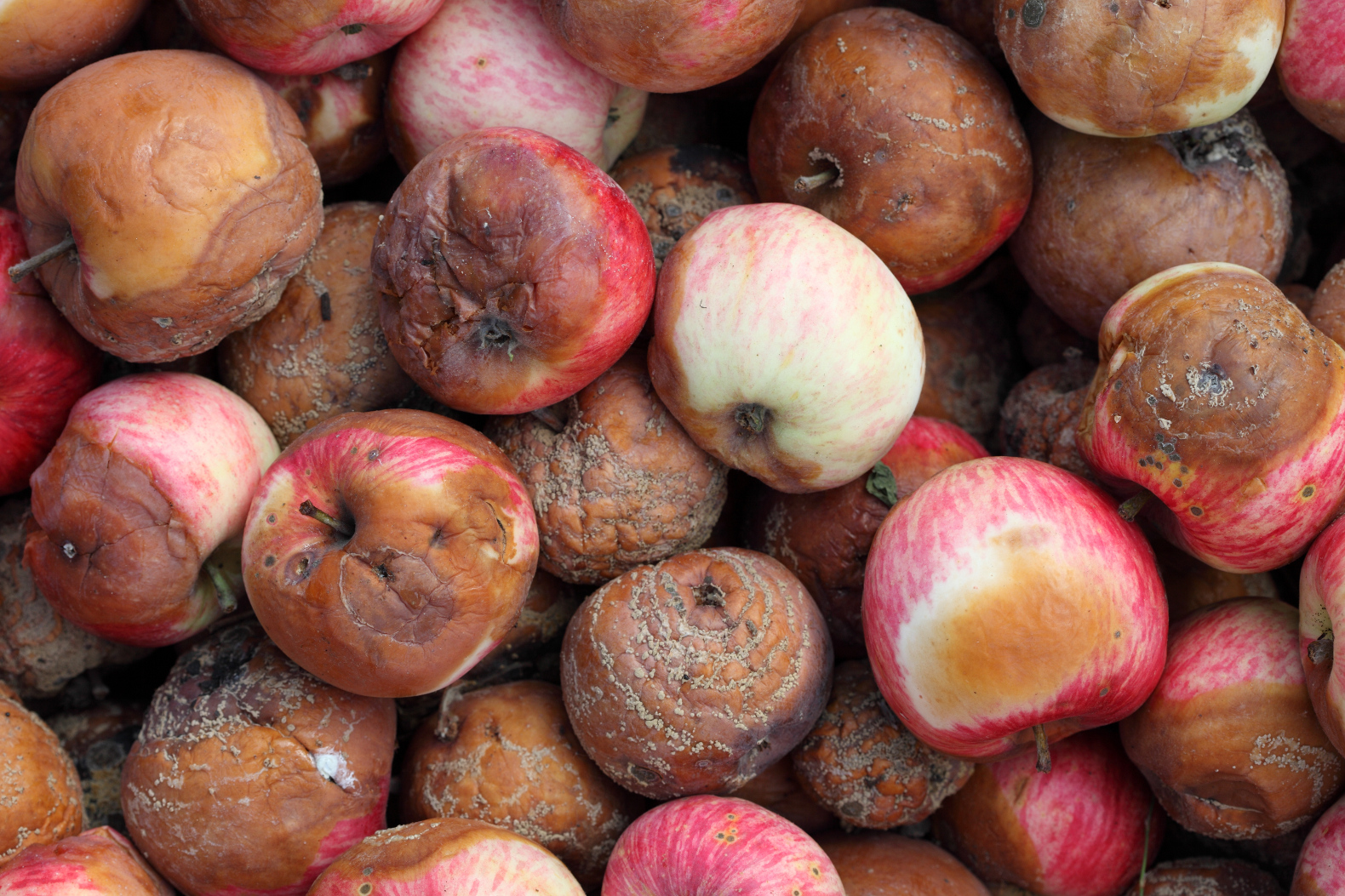 scientists turn rotten apples into highly efficient batteries