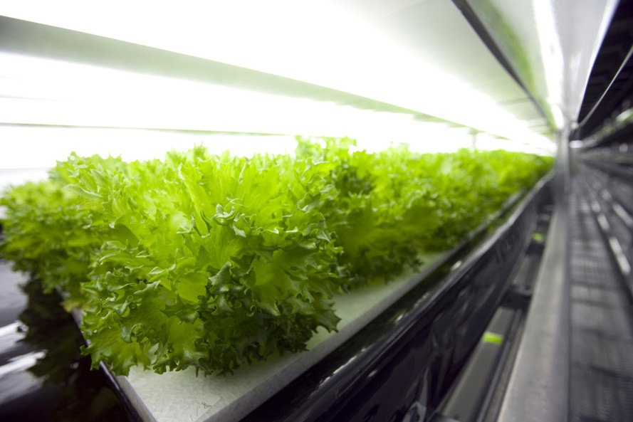 Robot-run farm, first robot farm, Japan robot farm, SPREAD, Kameoka, Kansai Science City, Vegetable Factory, lettuce farm, Japan, massive lettuce farm in Japan, lettuce farms Japan, indoor vertical farms Japan
