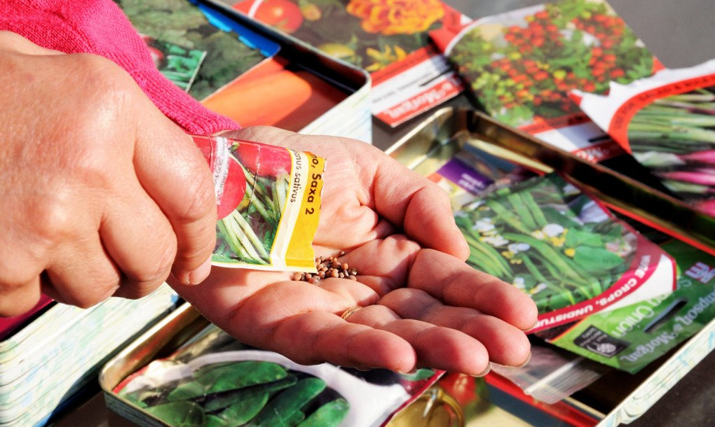 Vegetable Seed Packets « Inhabitat U2013 Green Design, Innovation,  Architecture, Green Building