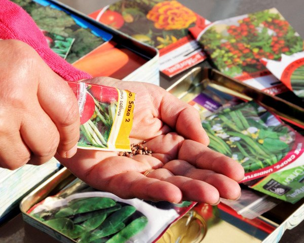 vegetable seeds, seed packets, seeds, vegetable seeds, gardening seeds, organic seeds, organic vegetable seeds, organic seed packets