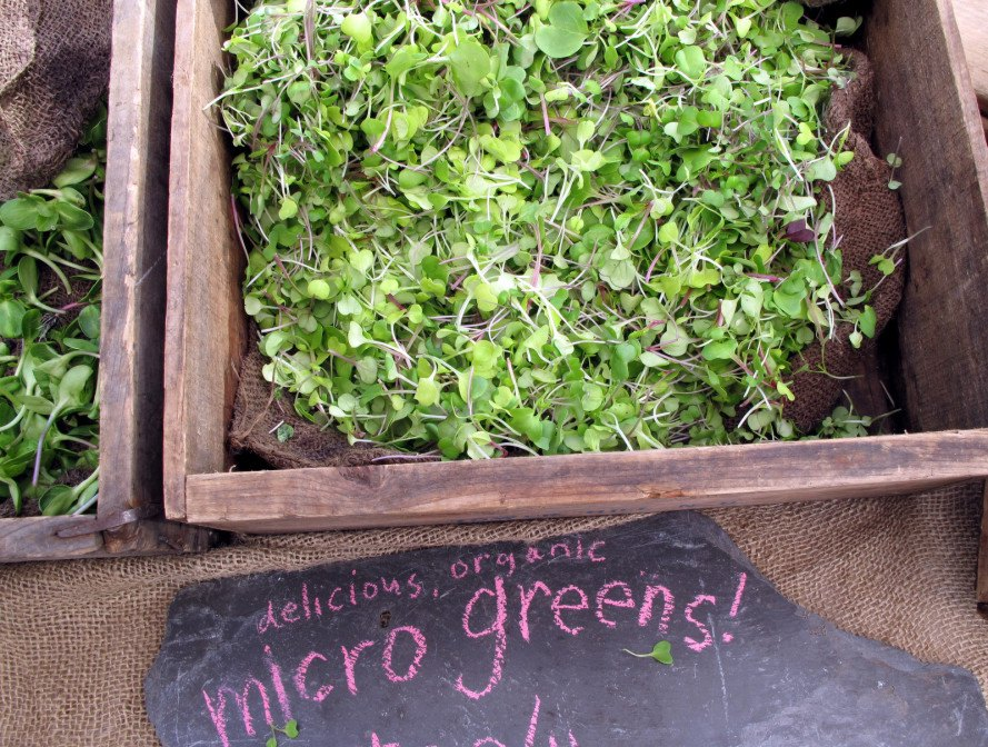gardening, urban, apartment, greenery, spring, decor, sprouting, seed bombs, guerrilla gardening, herbs, mason jars, alfalfa, terrariums, microgreens, DIY, propagating, succulents, potting soil