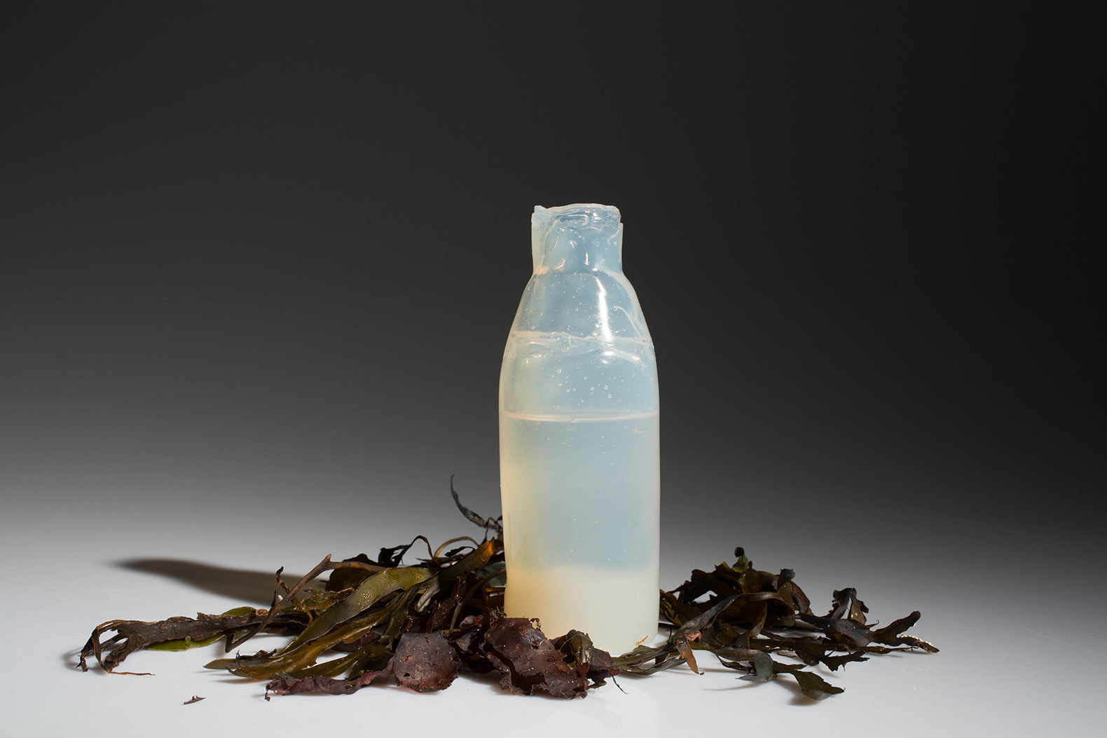 how to grow algae in a bottle