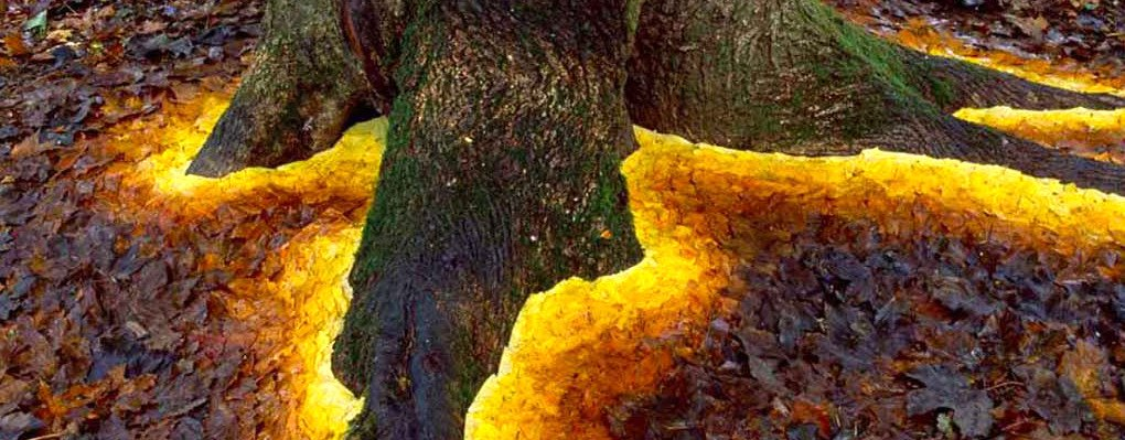 Andy Goldsworthy Creates Ephemeral Land Art With Natural