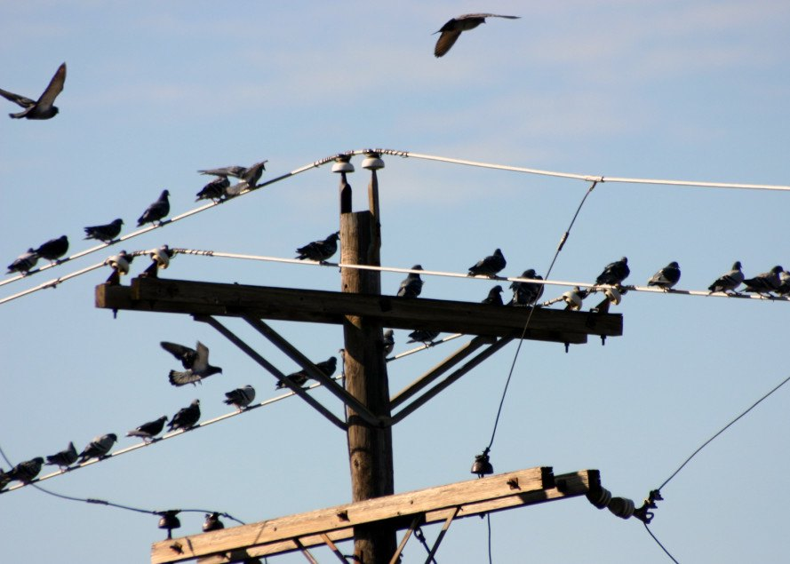 nuclear reactor outage, bird streaming, bird droppings, nuclear power, wildlife, bird poop, entergy corp