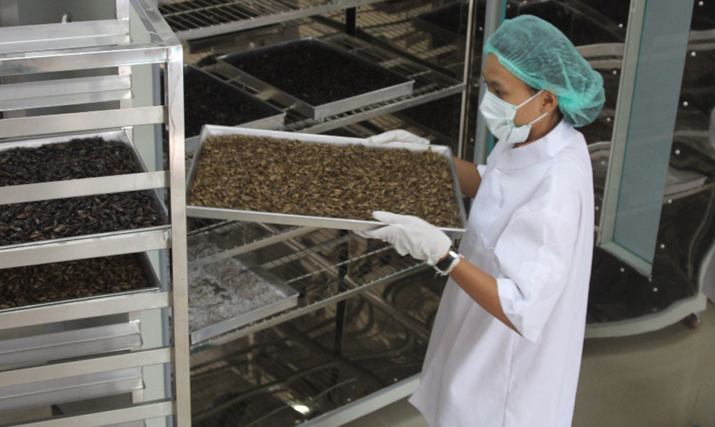 Thailand S Eco Insect Farming Produces Organic Cricket