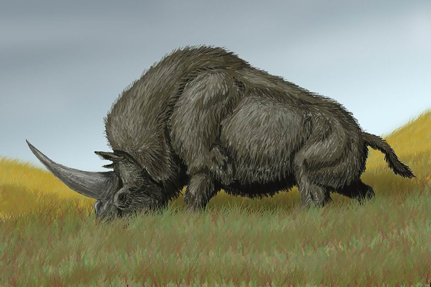 Siberian unicorn, elasmotherium sibiricum, fossil, radiocarbon dating, paleontology, animals, science