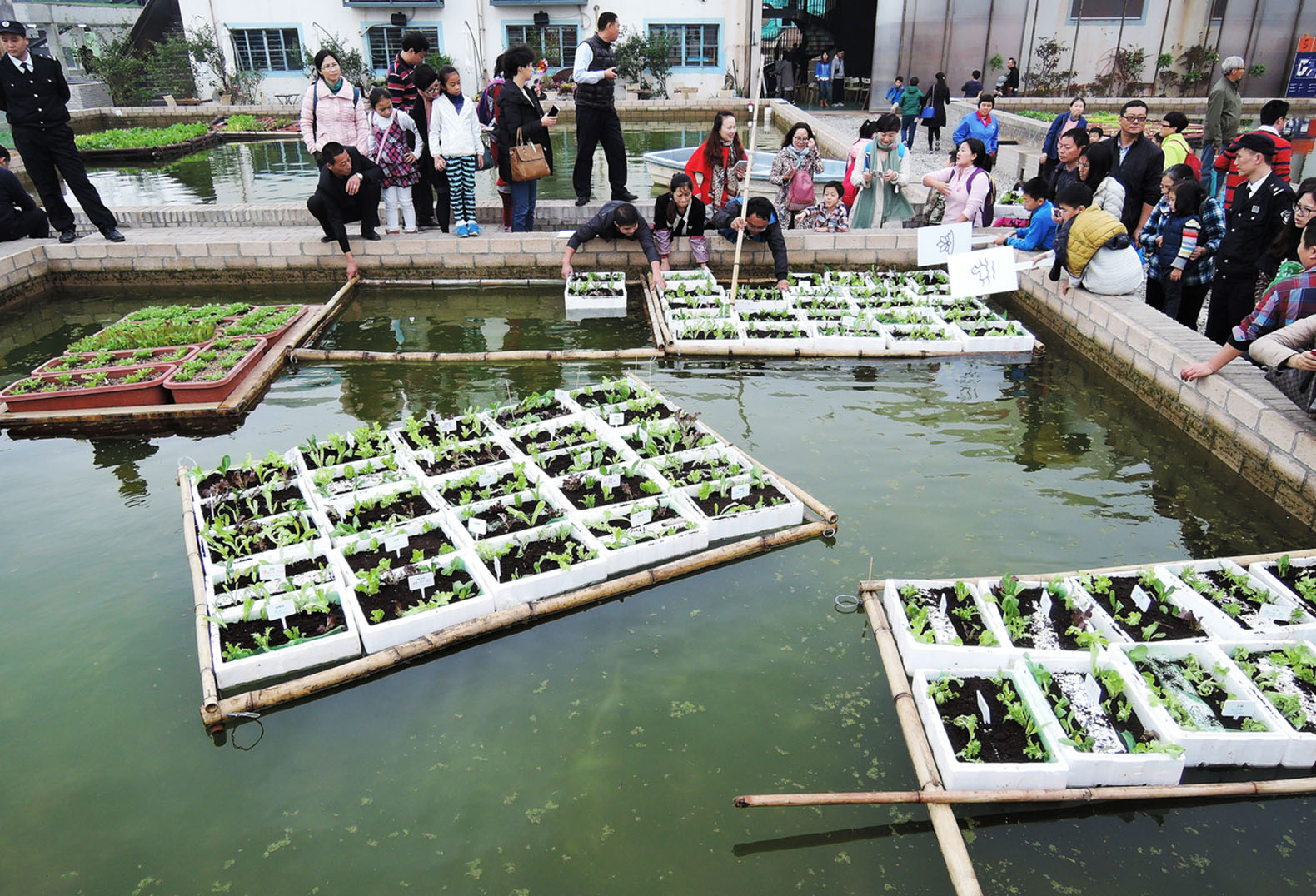 abandoned factory in china becomes a giant floating field of fish and algae