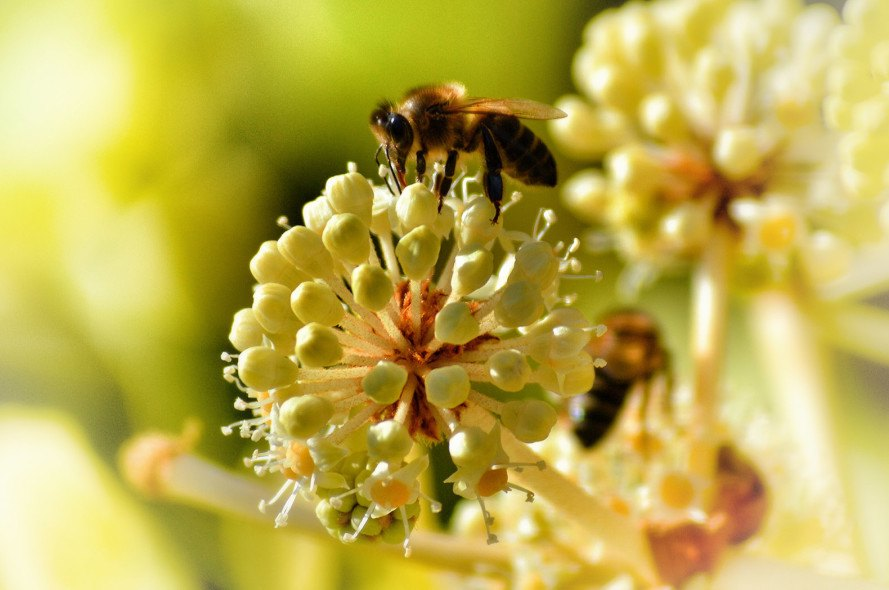 Honeybees, bees, bees dying, pesticides, pesticides killing honeybees, pesticide use