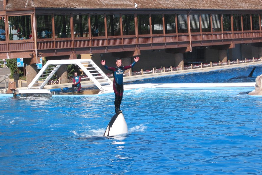 seaworld, peta, animal rights protests, animal rights activism, seaworld employee infiltrates protests, seaworld employee poses as activist, seaworld admits sending employee, peta accuses seaworld, animal rights