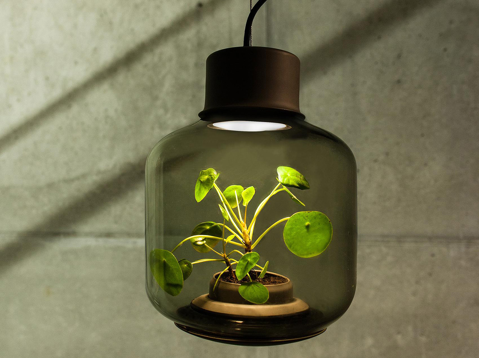 intended bulb grow indoor plant x plants lighting ideas light for measurements bulbs lights uv