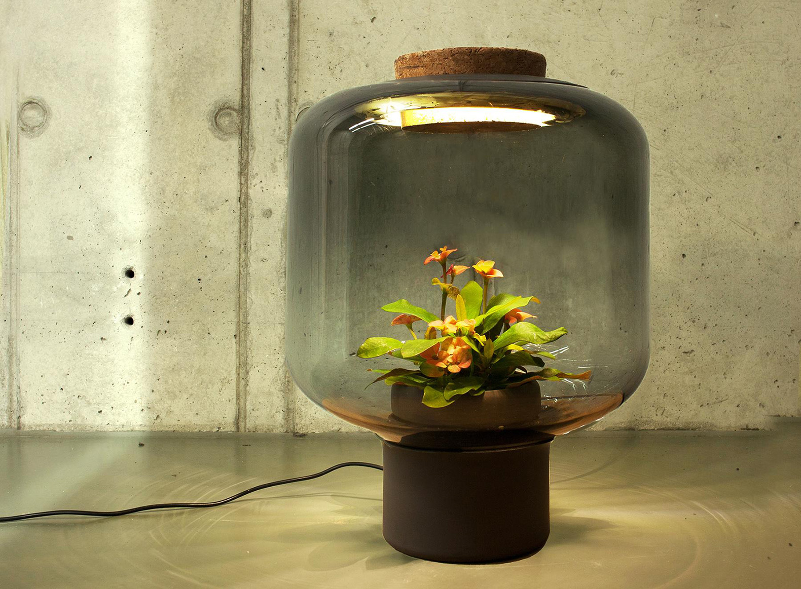 These lamps let you grow plants anywhere even in windowless rooms inhabitat green design - Plant growing lamps ...