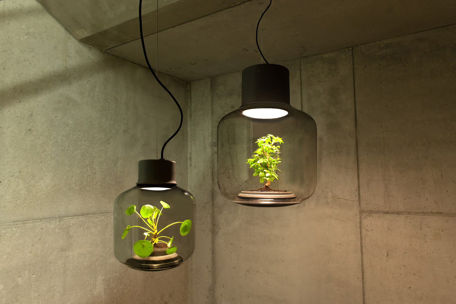 These lamps let you grow plants anywhere – even in windowless rooms