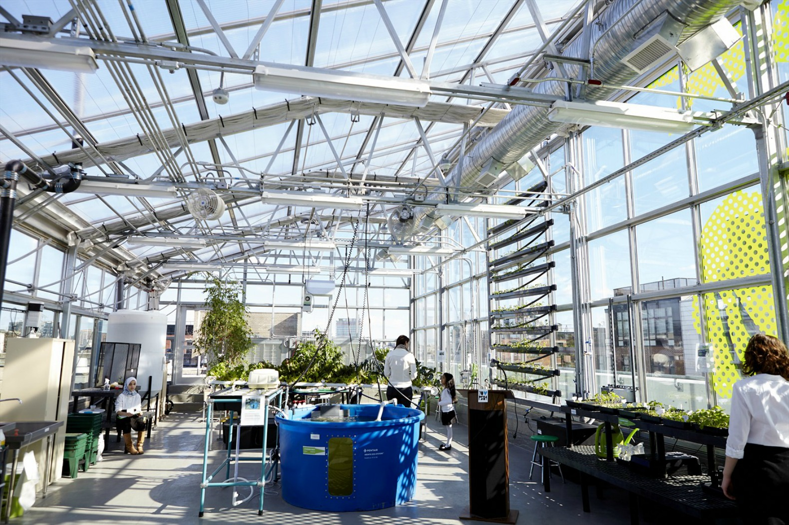 High Tech Hydroponic Rooftop Greenhouse Opens Atop Williamsburgu0027s PS 84