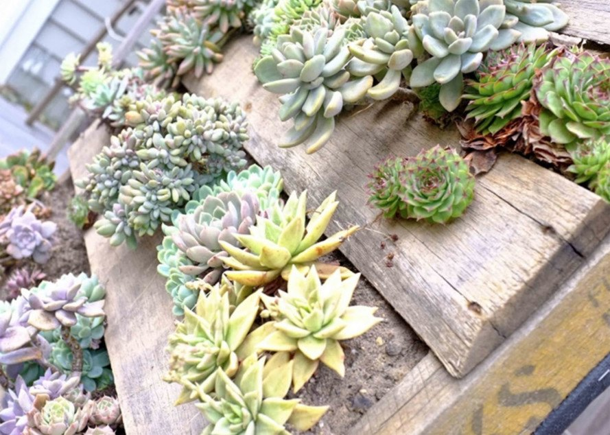 6 eco-friendly gardening ideas to dress up your yard this spring ...