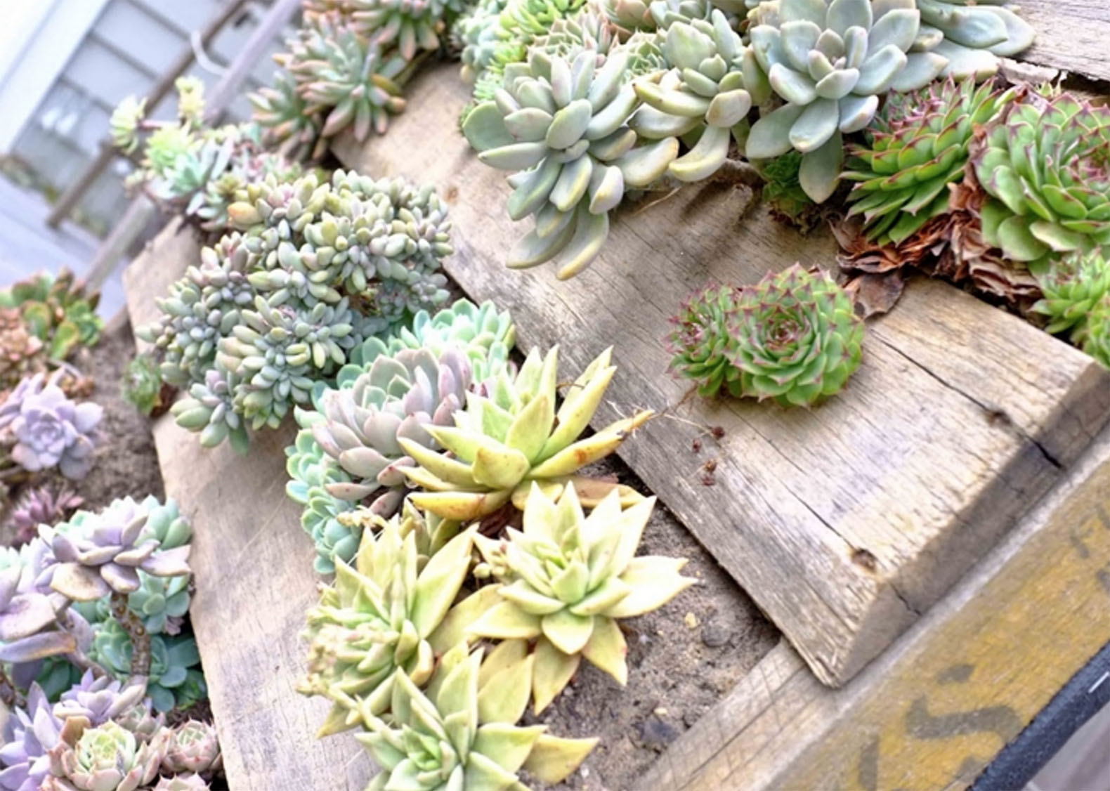 6 eco friendly gardening ideas to dress up your yard this Environmentally friendly decorations