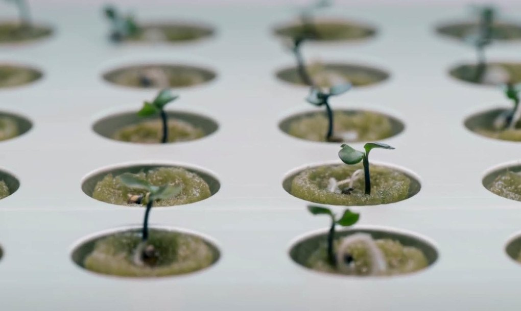 IKEA Launches Indoor Garden That Can Grow Food All Year Round | Inhabitat    Green Design, Innovation, Architecture, Green Building
