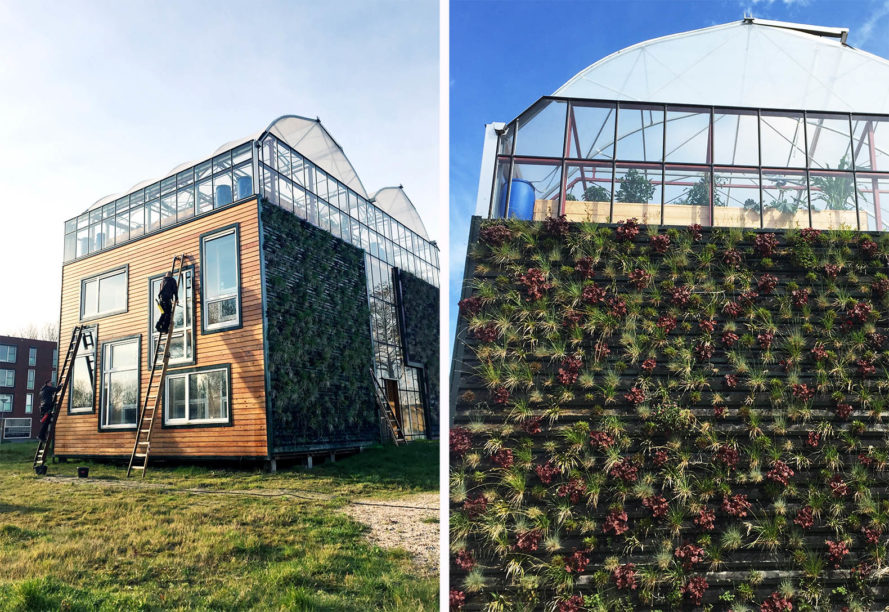 greenhouse, greenhouse living, cradle to cradle, green design, sustainable design, CHIBB, Rotterdam University, Helly Scholten, Arjan Karssenberg, vertical garden, rooftop garden, edible roof, prototype greenhouse, The Netherlands, family of four in giant greenhouse,