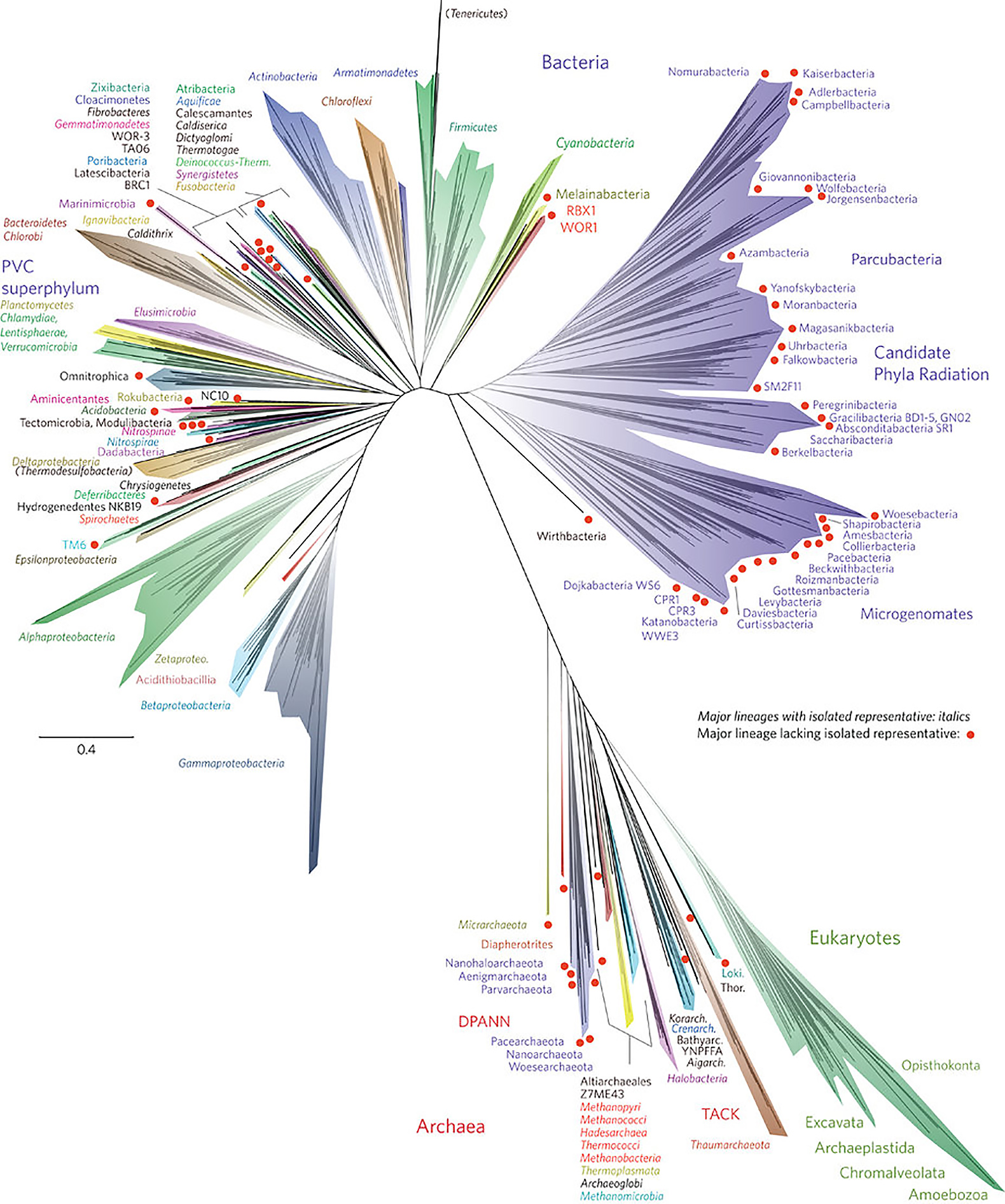Tree Of Life Redesigned To Reflect Thousands Of New Species