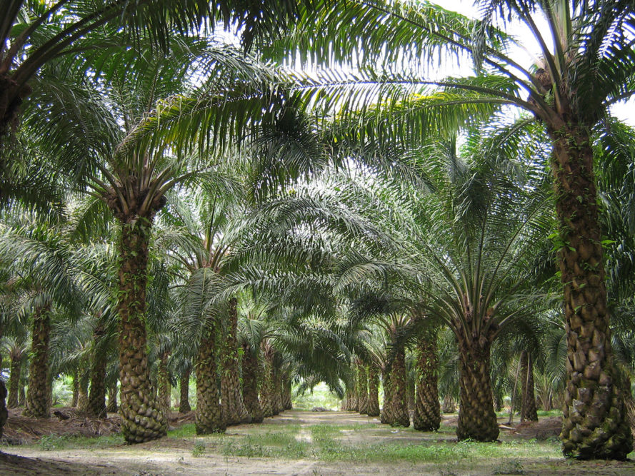 Indonesia, palm oil, palm oil ban, deforestation, environment, environmental destruction, Joko Widodo, mining, economy