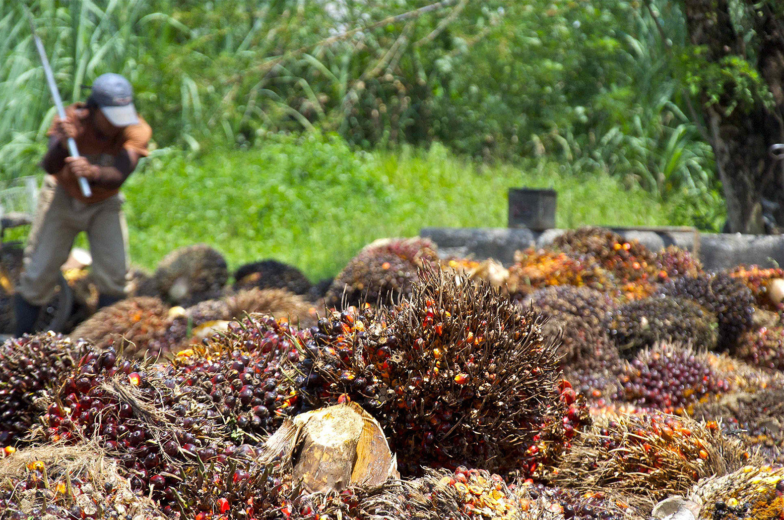 palm oil industry Greenpeace defends the natural world and promotes peace by investigating on top of this, the rspo actually risks creating the illusion of sustainable palm oil, justifying the expansion of the palm oil industry our investigations.