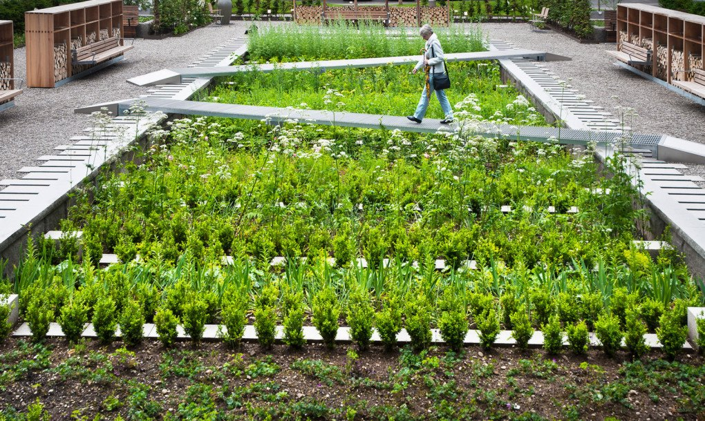 A Medicinal Herb Garden Takes Root On The Grounds Of A