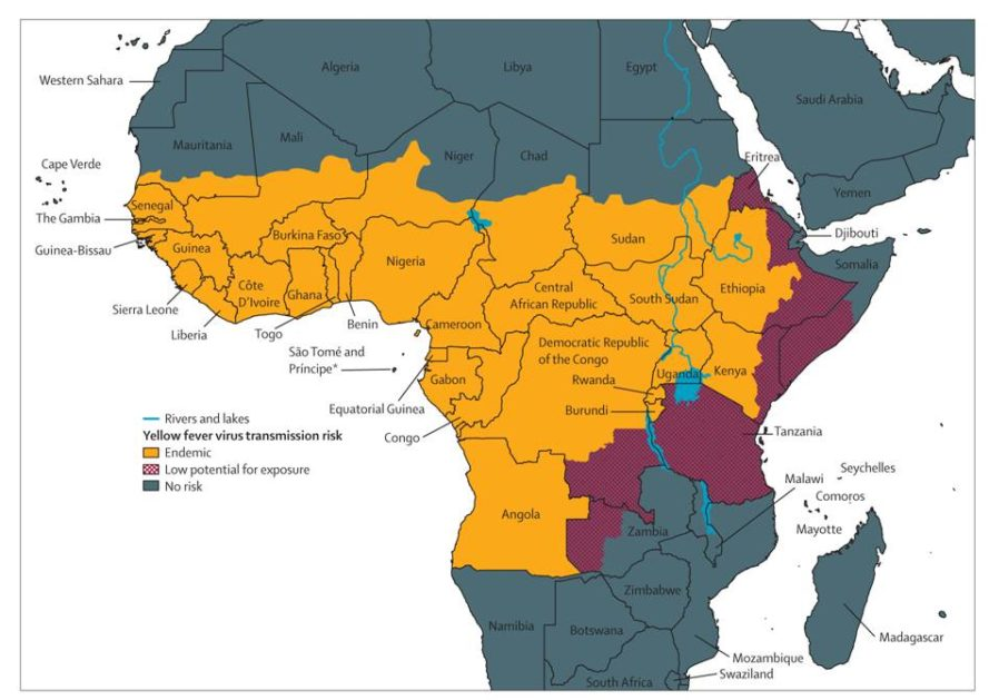 Aedes aegypti, Aedes aegypti mosquito, mosquitoes, yellow fever, zika virus, dengue fever, angola, africa, world health organization, centers for disease control, yellow fever outbreak, mosquito-borne illnesses