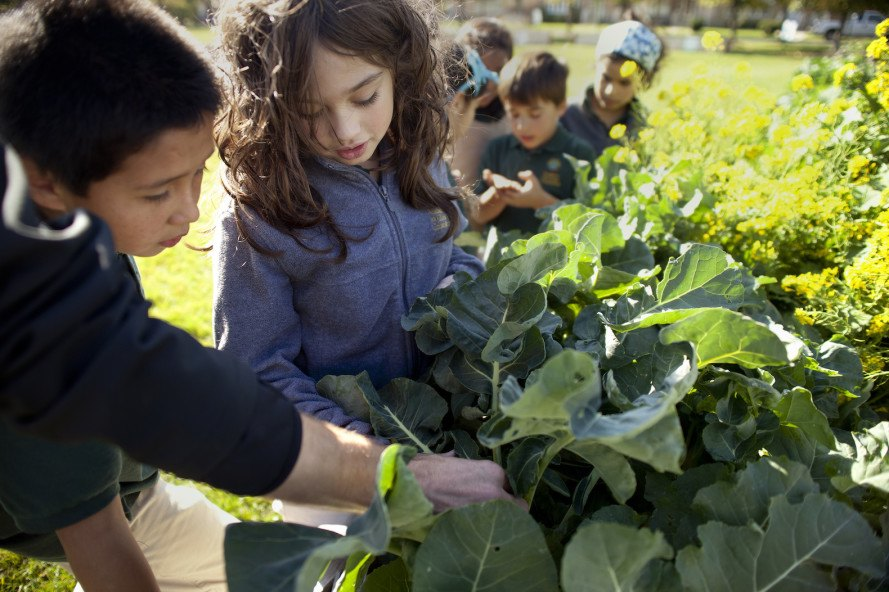 Academy for Global Citizenship by Studio Gang Architects, Academy for Global Citizenship Chicago, AGC Chicago school, urban farming school, schools teach kids how to grow food, urban farming curriculum, plus-energy school, sustainable school Chicago