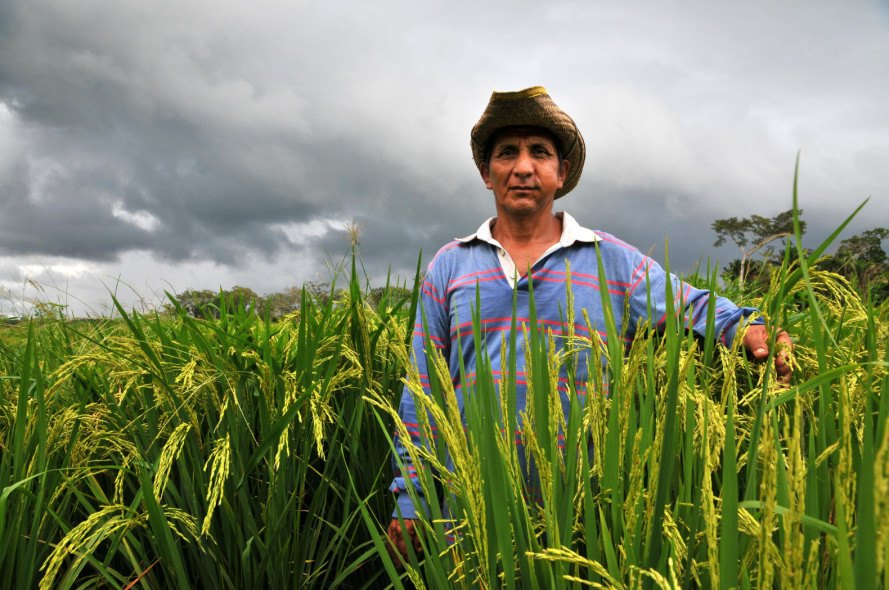 bolivia, food independence, food sovereignty, ipdsa, public institute for food sovereignty, local farms, local farmers, small farms, bolivia farms, farm investment