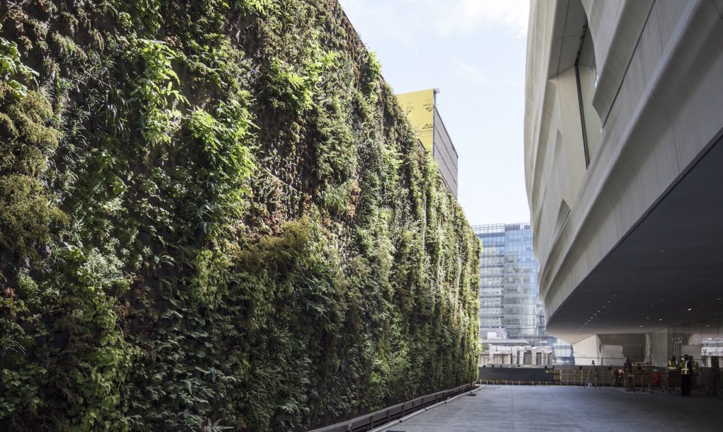 Good Nation us largest green wall of native plants breathes life into SFMOMA Inhabitat Green Design Innovation Architecture Green Building