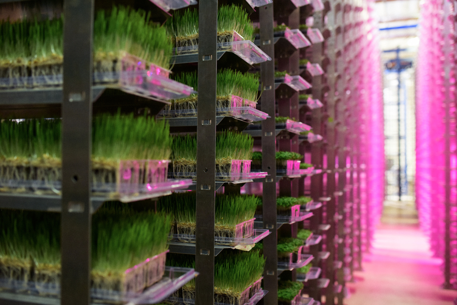 Urban Produce Vertical Farm Grows 16 Acres Of Food In Just