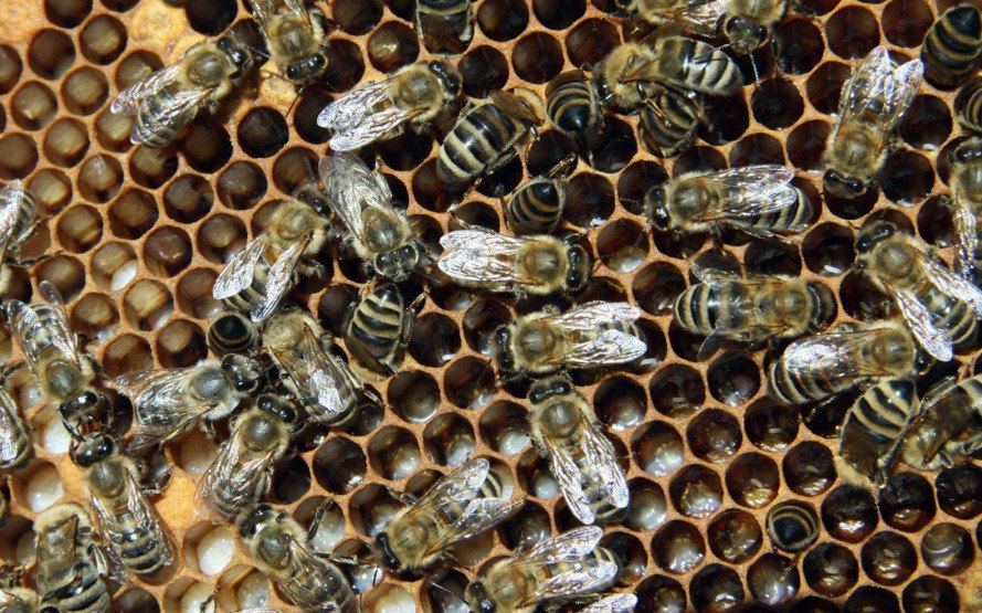 EPA, honeybees, bees, bee die-off, colony collapse disorder, neonicotinoids, pesticides, climate change