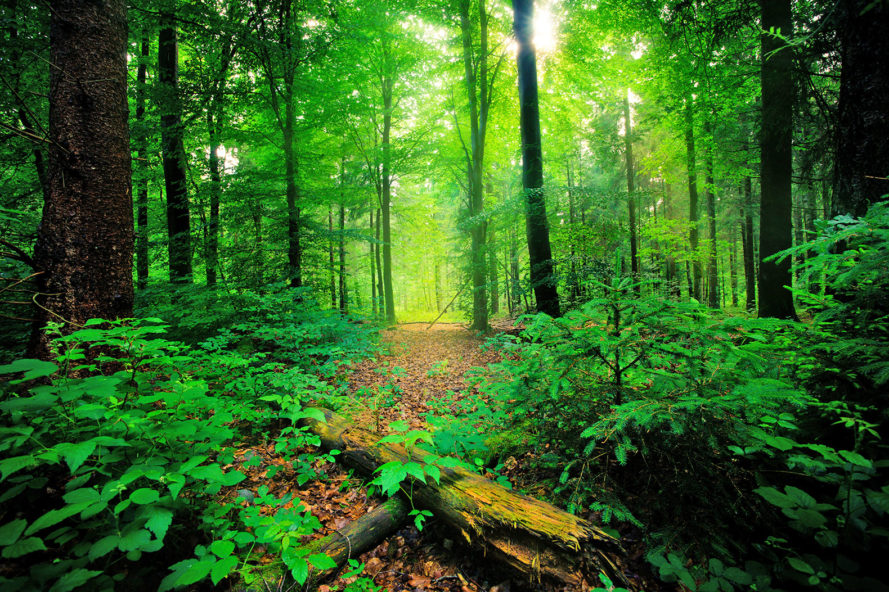 India, India environment, India afforestation, India forests, afforestation, forests, Narendra Modi, Compensatory Afforestation Fund Bill, billions of dollars to increase forest cover, forest cover, environment
