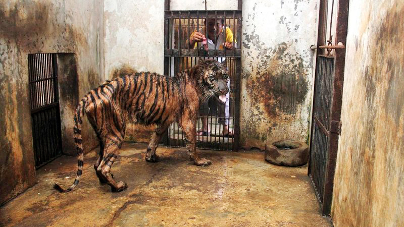 Surabaya Zoo, Indonesia zoo, zoo of death, Indonesia zoo of death, close zoo, zoo overcrowding, animals, animals zoo, should animals be in a zoo