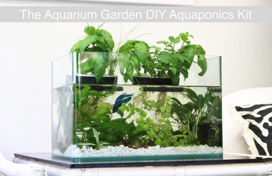 Aquarium garden transforms any fish tank into a lush for Growing plants with fish