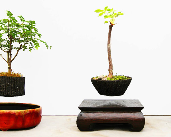 Mesmerizing levitating plants blend technology and nature