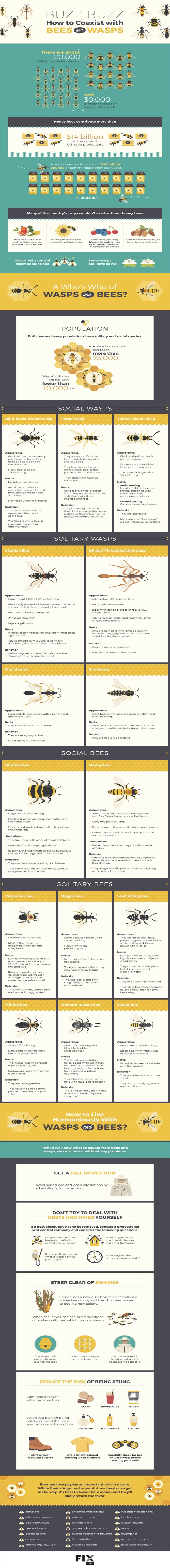 bees, save the bees, bee conservation, wasps,