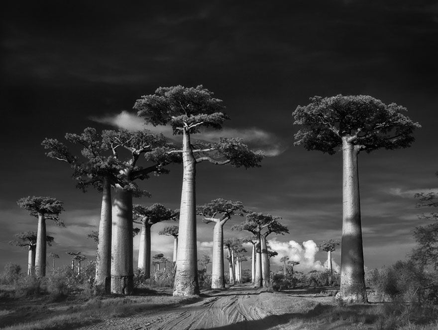 Artist Beth Moon travels the world to capture pictures of exotic and impressive trees